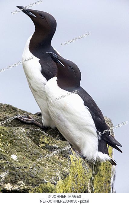 Seabirds on rock