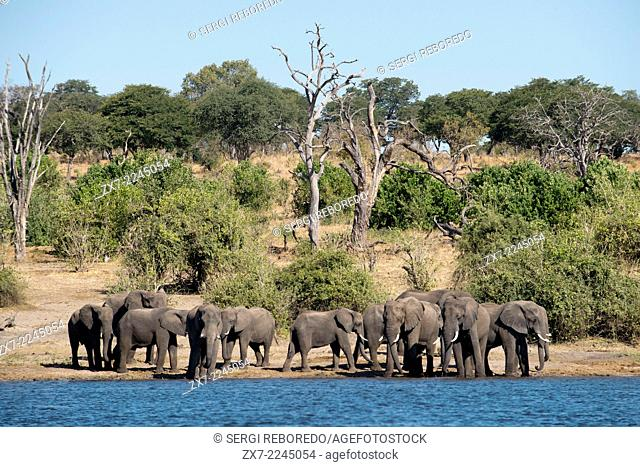From Victoria Falls is possible to visit the nearby Botswana. Specifically Chobe National Park. Chobe National Park. The Chobe National Park is located in the...