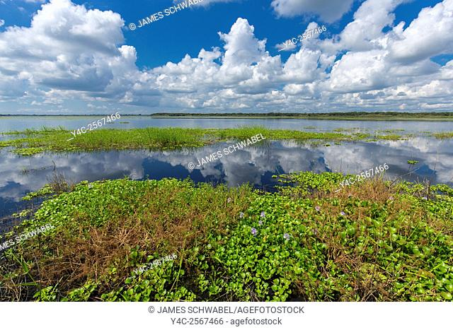 White summer clouds reflecting in Upper Myakka Lake in Myakka River State Park in Sarasota Florida