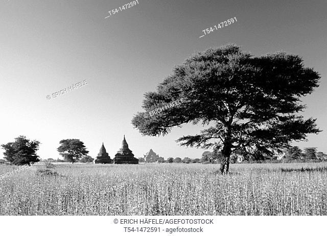Fields in Bagan / Myanmar