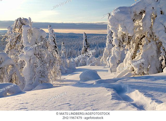 Winter landscape with snow hang on spruces and birches on mount Hirvas in Gällivare, Swedish lapland