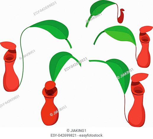 Red Nepenthes leaf isolated on white, vector design
