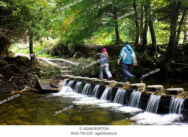Walkers crossing stepping stones over a cascading stream in Tollymore Forest Park, County Down, Ulster, Northern Ireland, United Kingdom, Europe