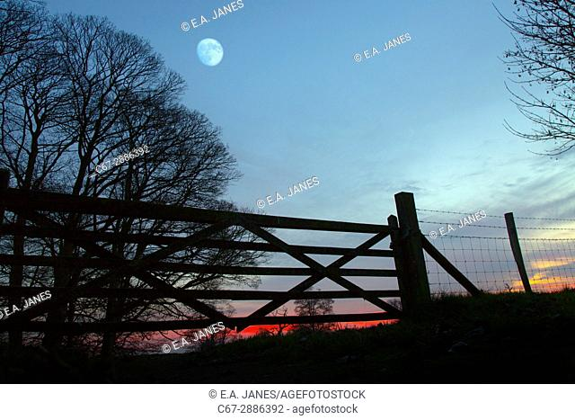 Five bar gate and Bare winter Beeches with rising moon Felbrigg Woods Norfolk