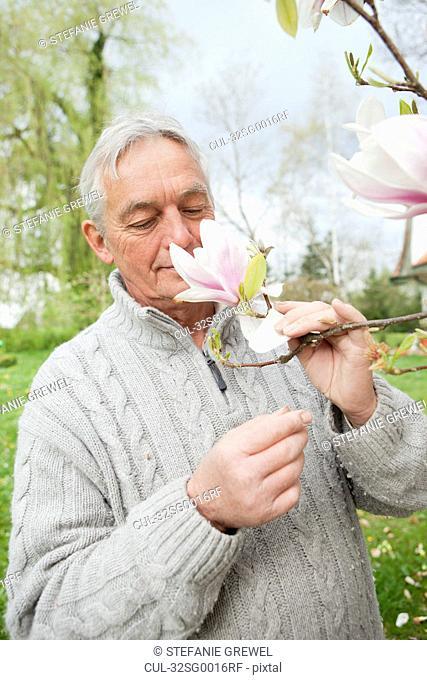 Older man smelling magnolia on tree