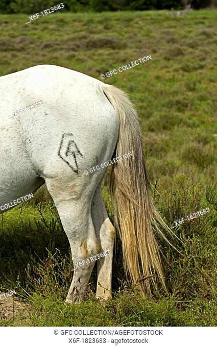 Brand of the breeder at a Camargue horse, Camargue, France