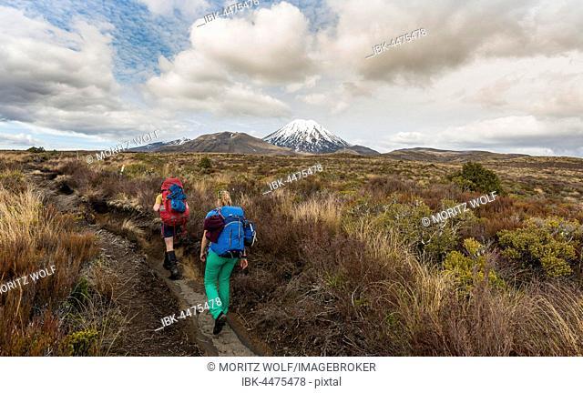 Hikers, volcano, Mount Tongariro and Mount Ngauruhoe, Tongariro National Park, Southland, New Zealand