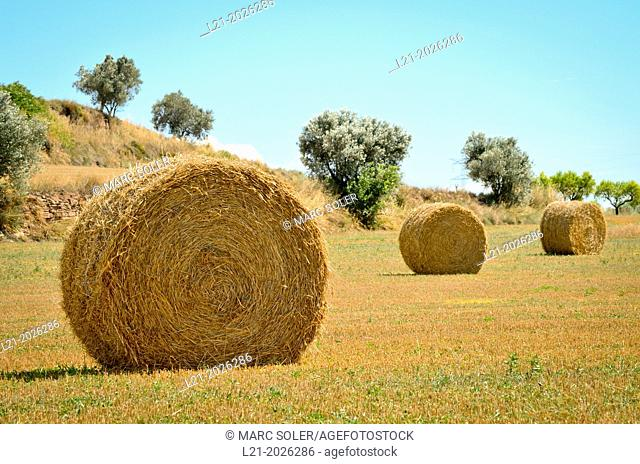 Harvested field with straw bales in summer. Barcelona province, Catalonia, Spain