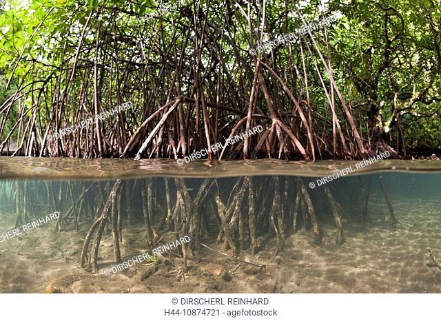 Risong Bay Mangroven, Risong Bay, Mikronesien, Palau, Risong Bay Mangroves, Risong Bay, Micronesia, Palau