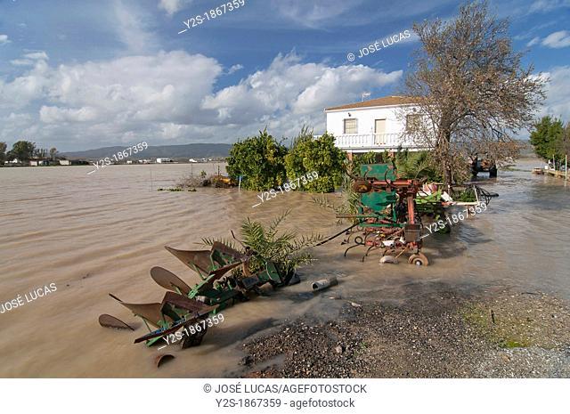 Guadalquivir river floods, Field next to Llanos del Sotillo quarter, Andujar, Jaen-province, Spain