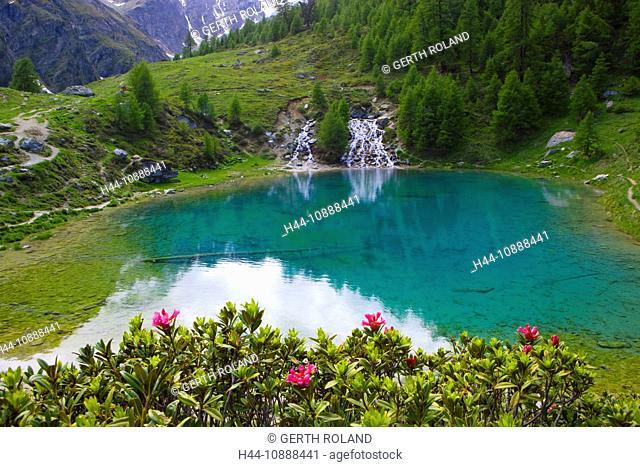 Lac blue, Switzerland, Europe, canton Valais, nature reserve Val d'Hérens, lake, color, brook, spring, source, flowers, Alpine roses