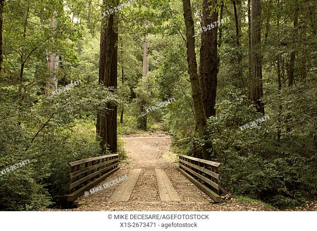 A wooden bridge fords a creek in a dense Redwood forest