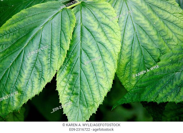 closeup of leaves with different shades of green