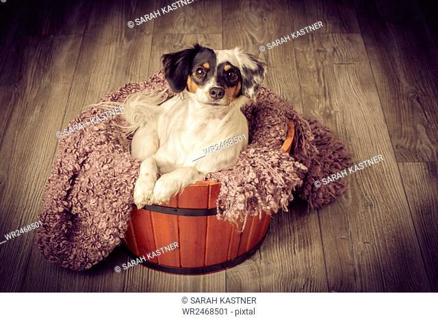 Little dog sitting in a wooden bucket
