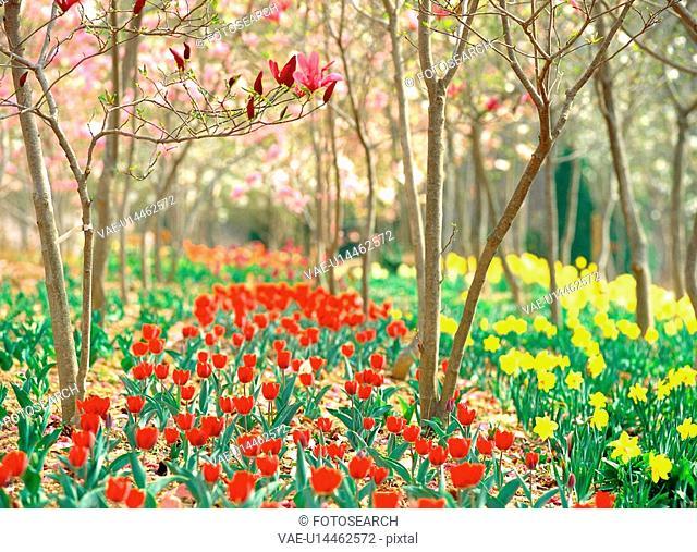 plants, plant, park, tulip, flower, film