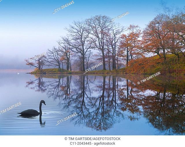 rydal,lake district, cumbria, england, uk, europe