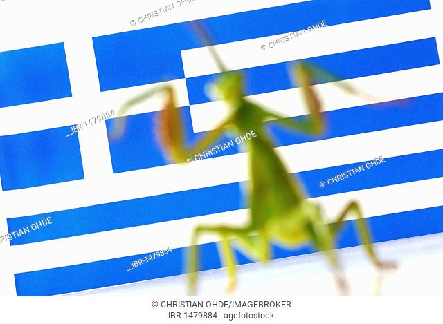 Grasshopper as a symbolic image for hedge funds on a flag of Greece