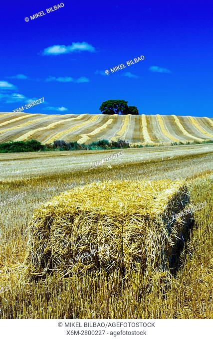 Cereal farm. Tierra Estella County, Navarre, Spain, Europe