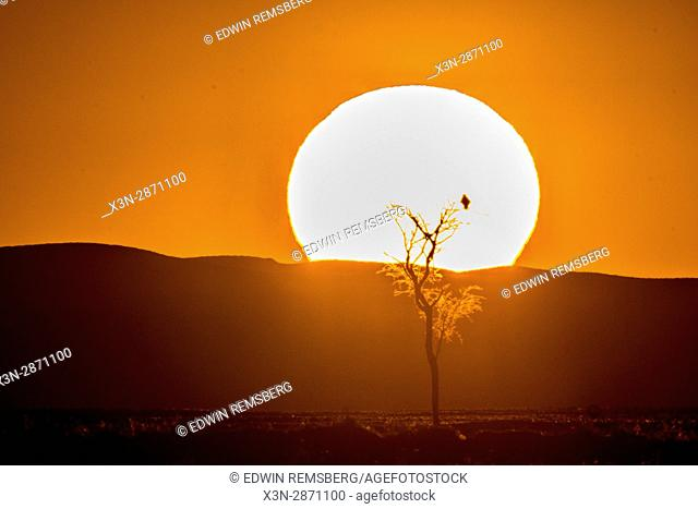 Dead acacia tree trunk silhouetted against the setting sun in the Deadvlei salt pan in Namib-Naukluft National Park, located in Namibia, Africa