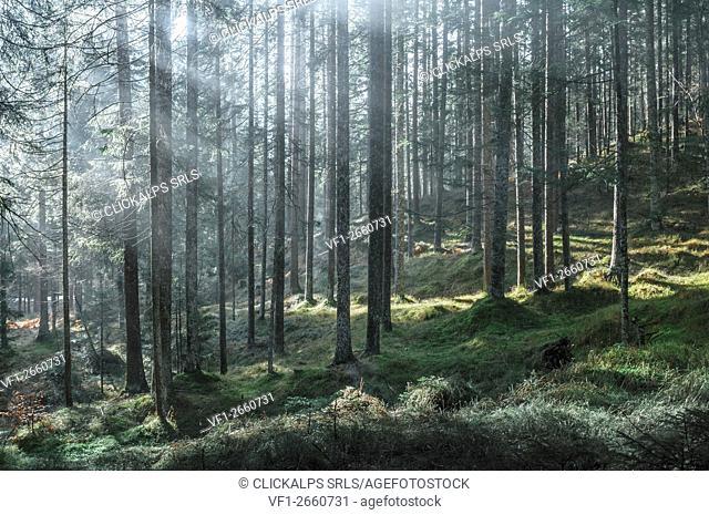 Val Marzon,Auronzo,Cadore,Dolomites,Alps,Veneto,Italy
