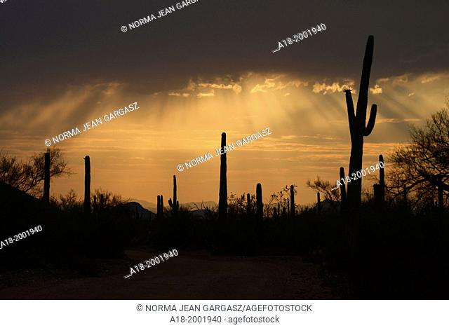 Ironwood Forest National Monument at sunset in the Sonoran Desert near Eloy, Arizona, USA