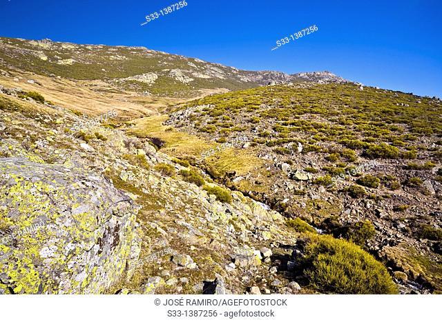 Sierra del Cabezo  Sierra de Gredos  Ávila  Castilla León  Spain