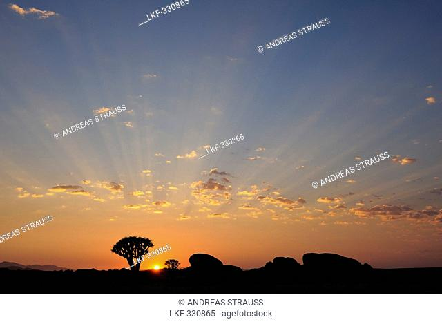 Sunrise above stone desert with quiver trees, Aloe dichotoma, Namib Naukluft National Park, Namib desert, Namib, Namibia