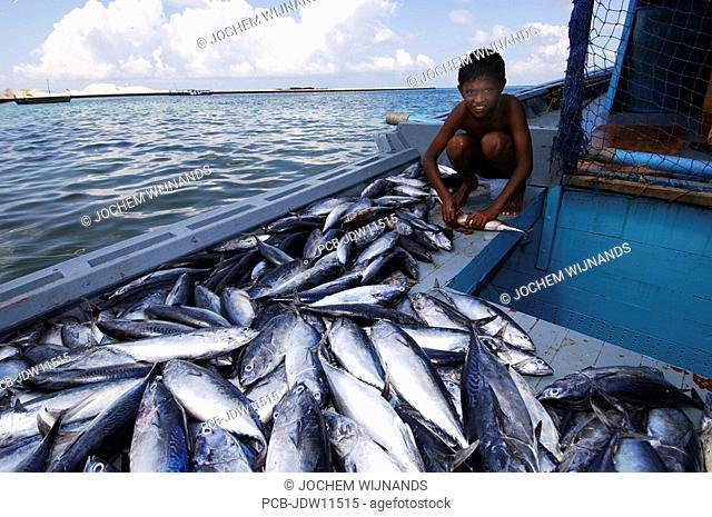 Maldives, cleaning fish