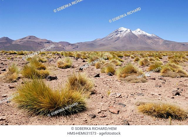 Chile, Antofagasta region, Atacama Desert, Lagoon and Miscanti Miniques, dried herbs and volcano in the highlands at 4,200 meters altitude in the Andes