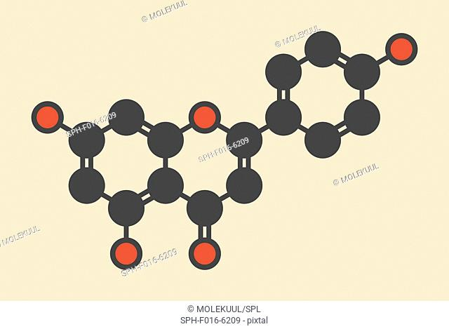 Apigenin yellow herbal dye molecule. Stylized skeletal formula (chemical structure). Atoms are shown as color-coded circles: hydrogen (hidden), carbon (grey)