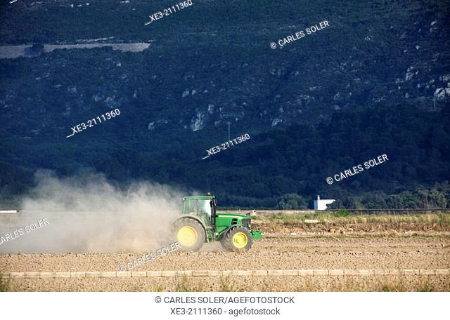 Rice fields, Sueca, Valencia, Spain