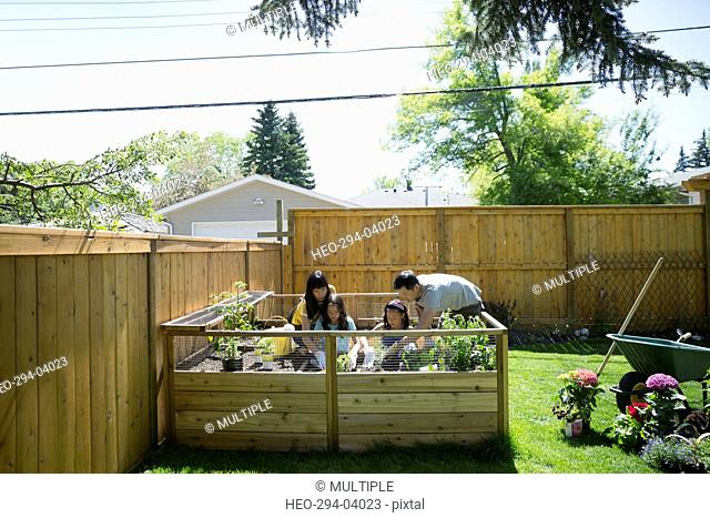 Family planting vegetables and herbs in sunny garden