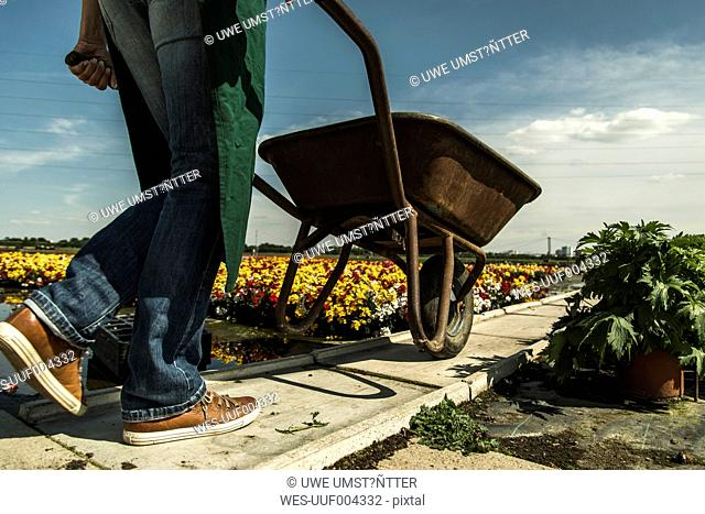 Woman pushing wheelbarrow at a nursery