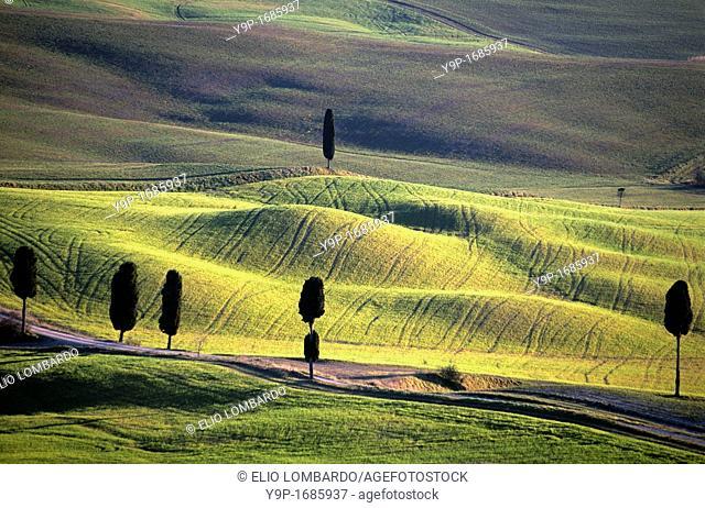 Val d'Orcia, near Pienza, Siena, Tuscany, Italy