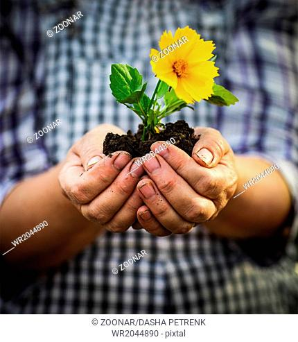 Woman holding a green young plant with yellow flower in her hands