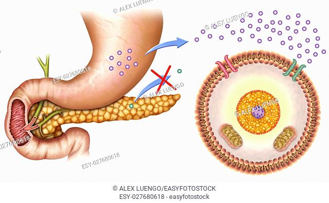 schematic illustration of the pancreas and stomach with normal levels of insulin and glucose in the blood