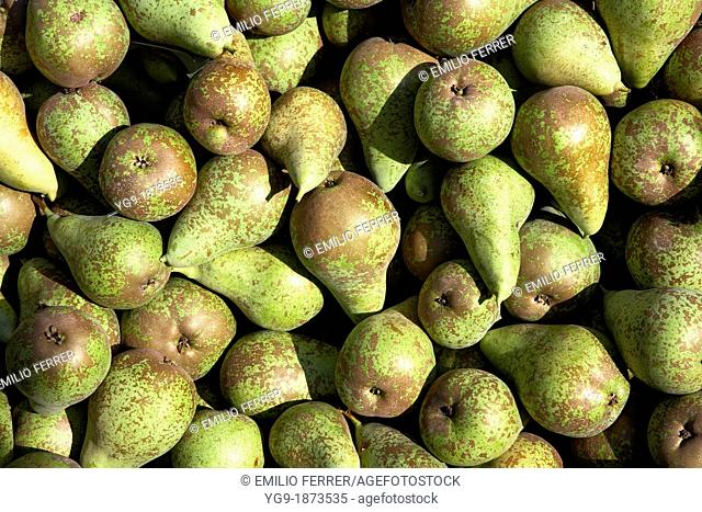 Pears Conference  LLeida  Spain