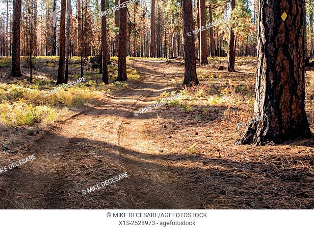 dirt road curves through Oregon forest