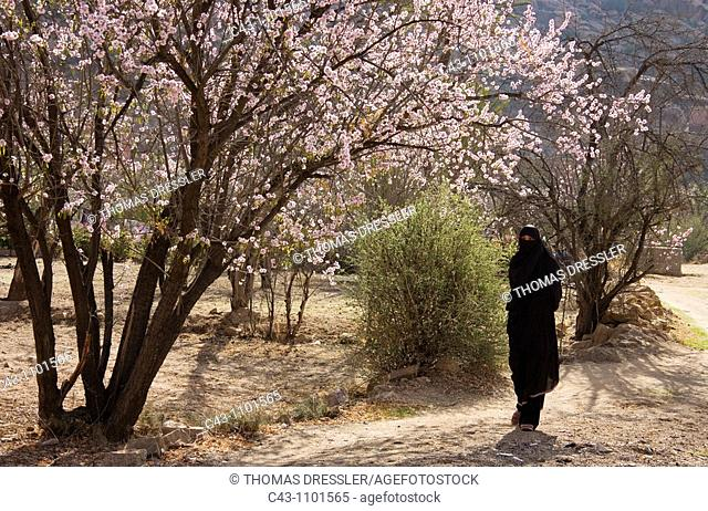 Morocco - Berber woman in the village of Adaï, near the town of Tafraoute in the Ameln Valley  Beginning of February at the blossom of the almond trees Prunus...