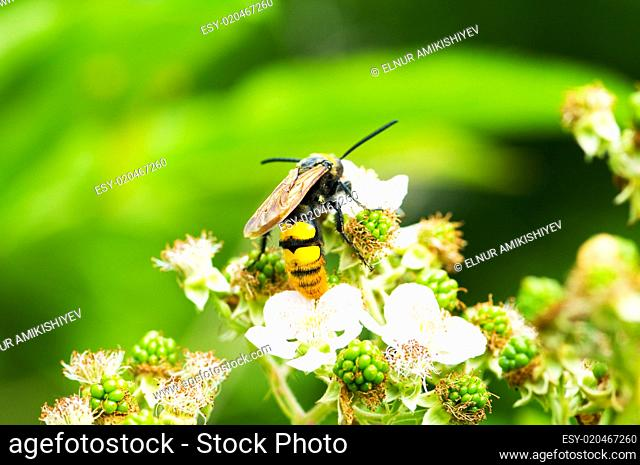 Bee sitting on the flower on bright summer day