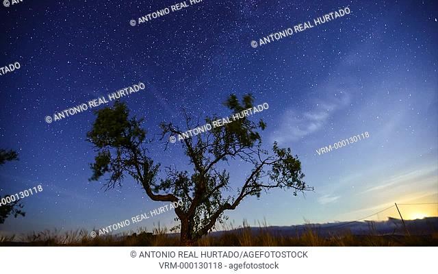 Tree and starry sky. Almansa. Albacete province. Spain