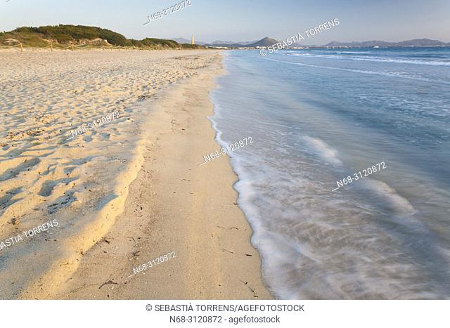 Playa de Muro, Alcudia bay, Muro, Majorca, Balearic Islands, Spain