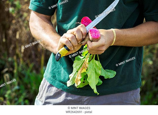 A man using a sharp knife to cut open a colourful striped beetroot vegetable