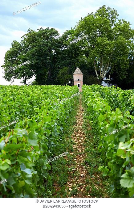 Vineyards, Château de Pommard, Wine route of the Grands Crus, Pommard, Côte de Beaune, Côte d'Or, Burgundy Region, Bourgogne, France, Europe