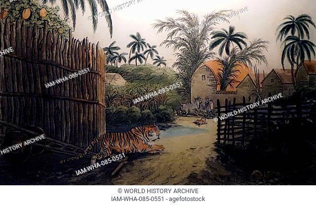 Bornean orangutan (Pongo pygmaeus) is a species of orangutan native to the island of Borneo. Together with the Sumatran orangutan