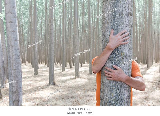 Man wrapping his arms around and hugging a poplar tree on a commercial tree farm