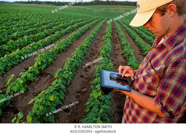 Agriculture - A young farmer in an early growth soybean field records crop data on his Apple iPhone and iPad. This represents the next generation of young...