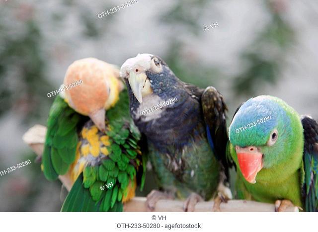 Parrots at Yuen Po Street bird garden, Mongkok, Hong Kong