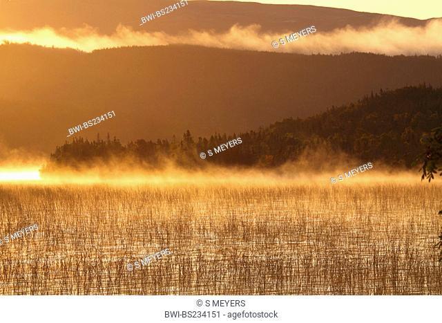 landscape in morning mist im Gros Morne National Park, Canada, Newfoundland, Gros Morne National Park