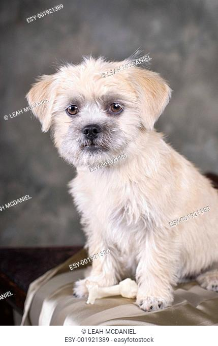 Mixed Breed Puppy Portrait